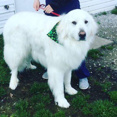 White_dog_spa